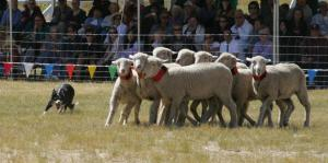 sheepdog-classic-this-weekend-at-soldier-hollow-15164